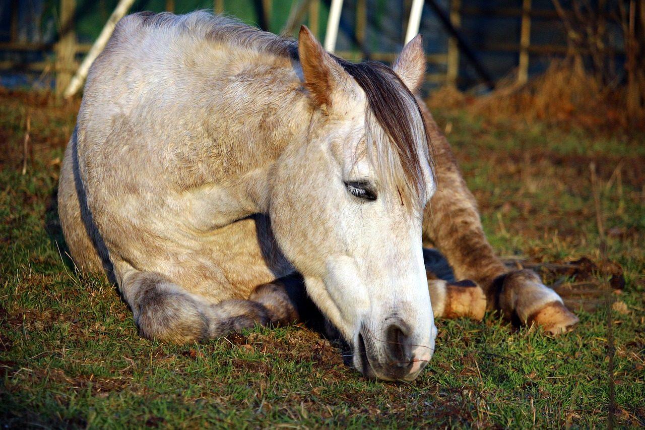 horse-1897025_1280